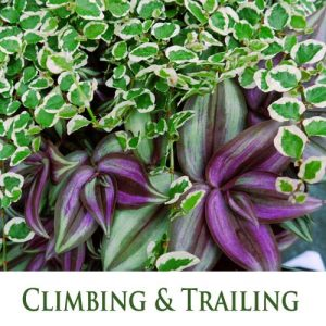 Climbing & Trailing